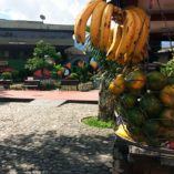 Banner-Local-Fruits-and-Market-Places-900×900-1